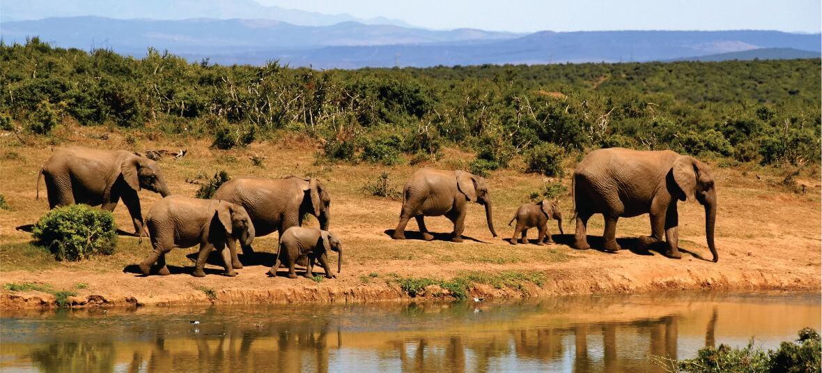 Horns Africa Safaris Tous & Travels